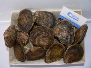 Nuestras ostras